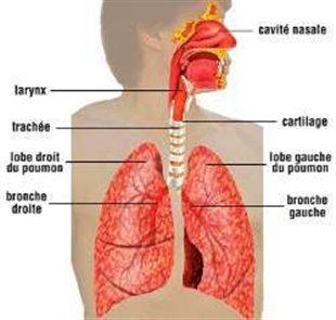 Fibroscopie broncho-pulmonaire