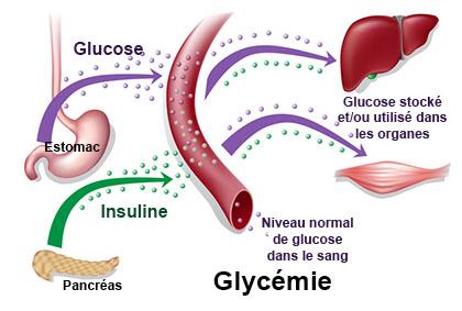 """Résultat de recherche d'images pour """"glycemie"""""""