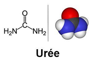 Urémie