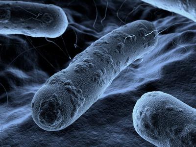 cytobactériologique - définition - C'est quoi