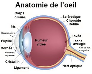 Maladies de l 39 oeil d finition for Definition de l