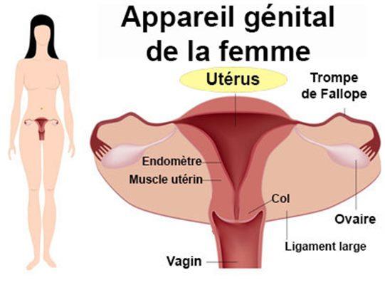 Hystérectomie : définition, technique - docteurclic.com