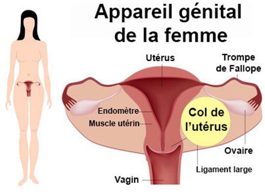 candida symptomes femme