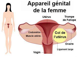 Frottis cervico-utérin (col de l'utérus)