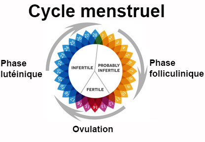 ovulation cycle 33 jours