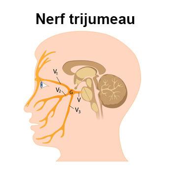 nevralgie trijumeau et acupuncture