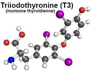 Dosage de la T3