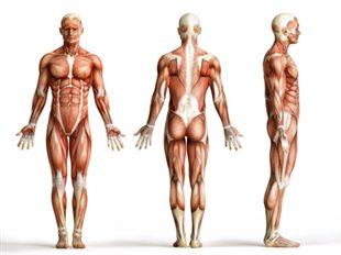 Chirurgie des tendons