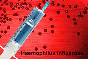 vaccin contre hemophilus influenzae traitement d finition. Black Bedroom Furniture Sets. Home Design Ideas