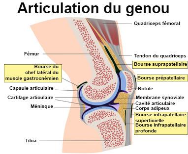 maladie des cartilages