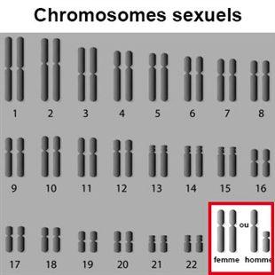 Transmission liée au sexe