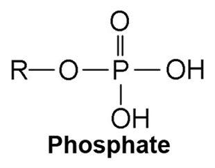 Phosphatases alcalines