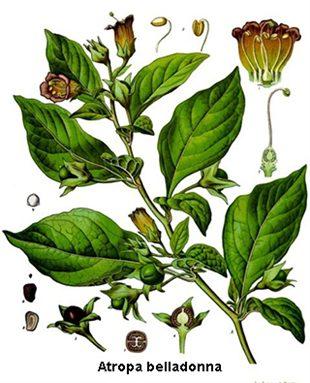 Belladonna (homéopathie)