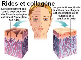 proteine collagène