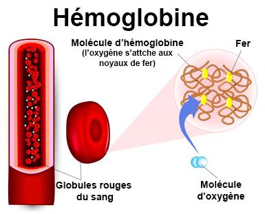 Hémoglobine examen - docteurclic.com
