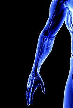 Douleur du bras : symptômes, traitement, définition ...