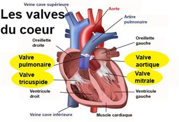 """Résultat de recherche d'images pour """"valve de starr"""""""