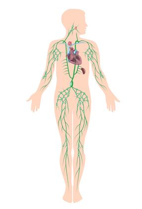 Maladie de Hodgkin : symptômes, traitement, définition ...