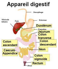 Occlusion intestinale : symptômes, traitement, définition ...