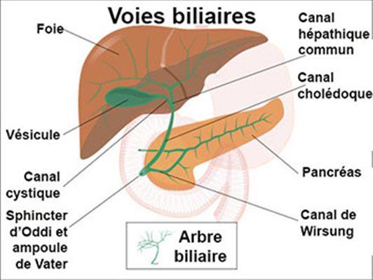 Cancer pancreatic - Wikipedia Cancer ducto biliar Que es cancer biliar