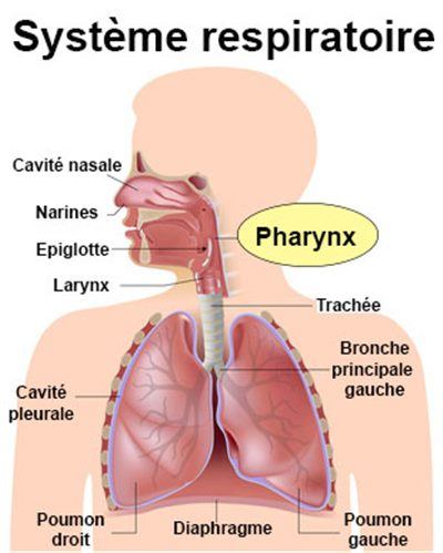 Cancer du pharynx