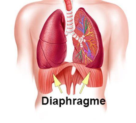 Mal au diaphragme : symptômes, traitement, définition ...