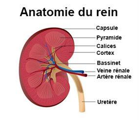 Abcès : symptômes, traitement, définition - docteurclic.com