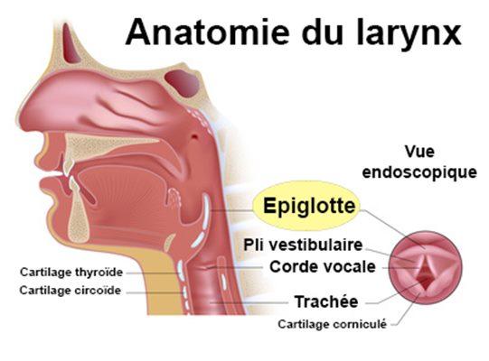 Épiglottite : symptômes, traitement, définition ...