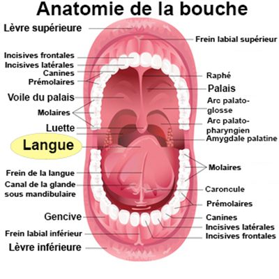 Langue action pipe
