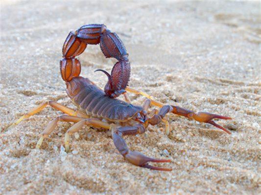 conseils pour sortir avec un homme Scorpion