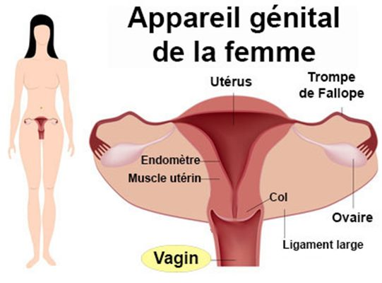 Infection vaginale ou vaginite