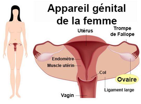 Kyste de l'ovaire : symptômes, traitement, définition ...