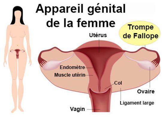 Grossesse extra-utérine : symptômes, traitement, définition ...