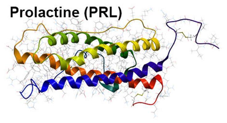 Prolactine : symptômes, traitement, définition - docteurclic.com