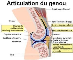 Douleurs du genou : symptômes, traitement, définition ...