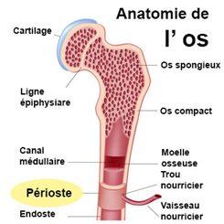 Ostéomalacie : symptômes, traitement, définition ...