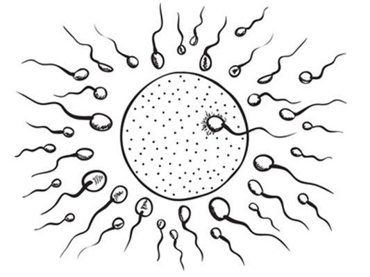 rencontre test sanguin grossesse