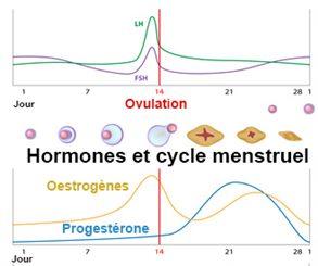 Kystes ovariens, traitements par la progestérone et la ...