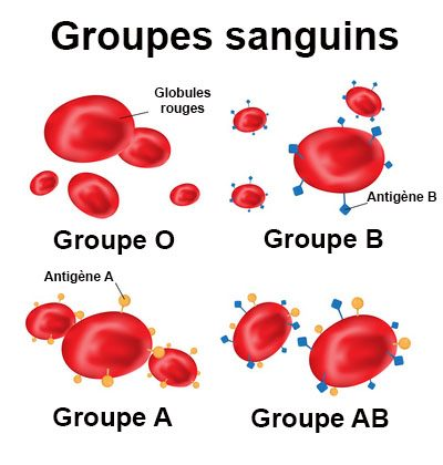 Groupes sanguins